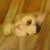st_archer: (Кіт)