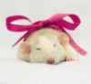 mousetail: Sleeping mouse with a pink box (study rat)