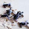 ironwood: (TURTLE / hatchlings)
