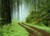 belladhanna: (Forest)