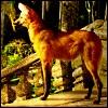 ostro_goth: (x - maned wolf)