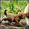 ostro_goth: (Fox cub)