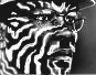 rezoner: (zebr)