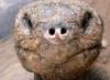 una_tartaruga: (pic#792790)
