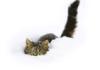 beautifullady22: (сніг)