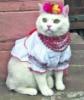 beautifullady22: (котик)
