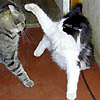 skytramp: (cats)