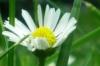 w4aslyva: (квіточка)