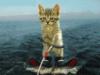 gatta_bianka: (water-ski)