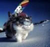 gatta_bianka: (лыжи)