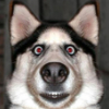 sir_dog: (сабакаахуевш...)