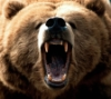 grizzlys: (Grizzly: Hear me roar)