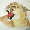 diversific: Snarling cougar, coloured pencil (Nic'sFic)