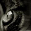 fivetimesdead: (кошкин глаз)