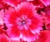 xpywuk: (мої квіти)