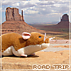 muridae: (road trip mouse)