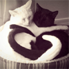 rootsofthestories: Two cats hugging. (misc: cuddling cats)