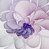 kate_nepveu: white and purple floral fractal (luminous)