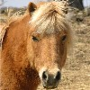 blue_bolete: (fuzzy pony)