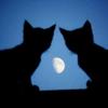 jazzyglo: (Cats)