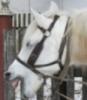 istunoff: (конь)