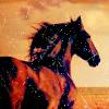 gemboo: (stallion)