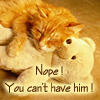 "yeuxdebleu: Cat holds teddy bear ""You can't have him"" (Cats Holds teddy bear ""You can't have hi)"