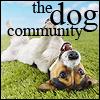 thedogcommunity: (the dog community)