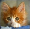 charisstoma: (cat- meep)