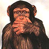 newsparky: (MONKEY)