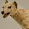 thylacine: (Default)
