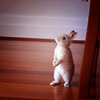 mingbook: (% bunny standing tall)