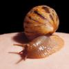 wizzard: (snail)