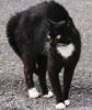 megana: (злая кошка)