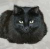 megana: (кот)