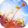 eden10: (цветы и небо)