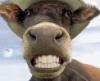 virtualsmoker: (smile)