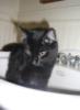 impromptu: (kitty)