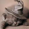 ysobel: Sleepy kitten with a wizard hat on (kitty magic)