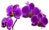 roar22: (орхидей)