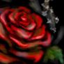 rubyredrose: (ruby red rose)