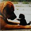 jovi_gal: (dog and kitten)