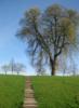 valya_stuttgart: (дерево)