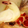 nightdog_barks: Painting of a white crow or raven with a pomegranate seed in its beak (White Raven)