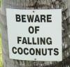 gemfyre: (Falling Coconuts)