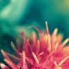 aelia: pink flower (pink turquiose)