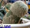 ivan_da_marya: (cactus cock)