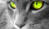 free7er: (Green eyes)
