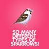 raanve: So many sparrows! (Fandom: 30 Rock: Sparrows)