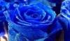 unpoeticjustice: (beautiful, vibrant, blue, flowers)